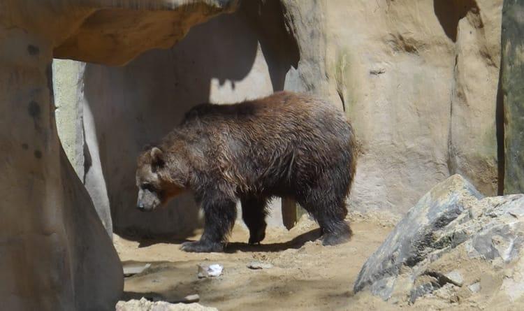 Afstandsbediening deur dierentuin