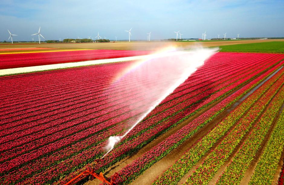 beregening tulpenveld Lelystad